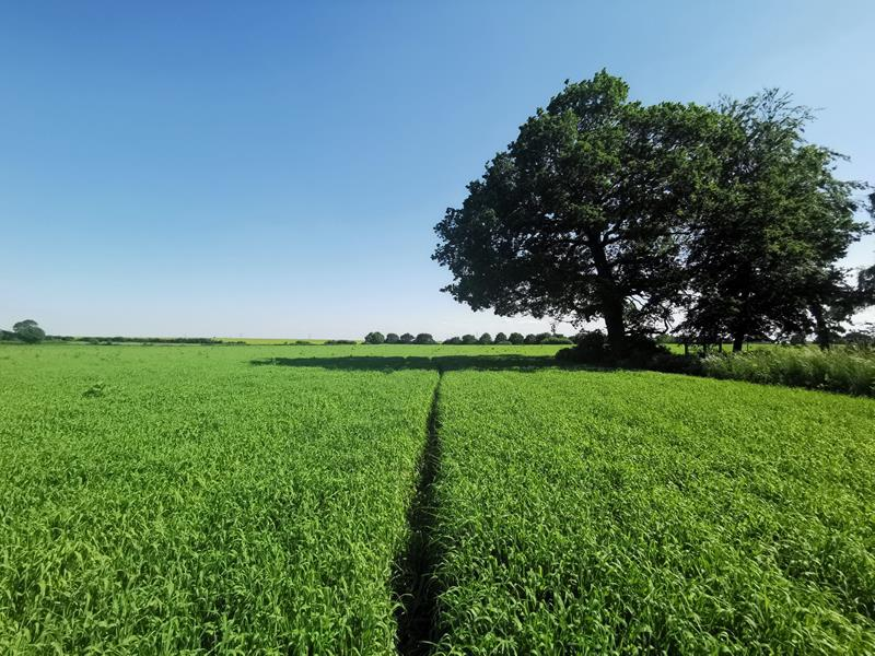 Arable Land For Sale